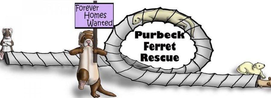 Purbeck Ferret Rescue